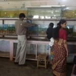 Personal på akvariet